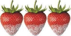 fraise stevia