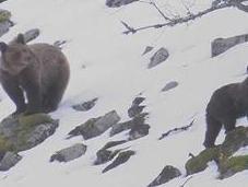 Cordillère Cantabrique neige fait peur ours