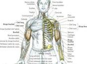 Exercice bras