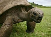 Jonathan, ans, tortue géante Seychelles.