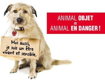 STOP à la torture animale