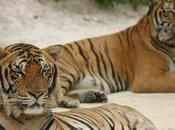 Tourisme animale Thaïlande