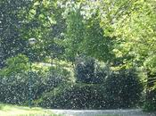 Projet Neige Pollen