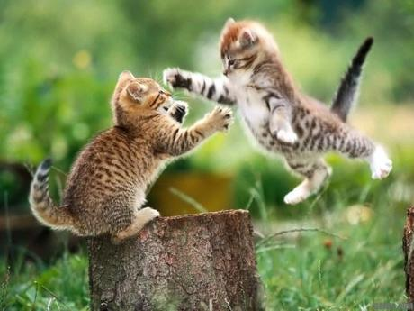 Epic-Pussy-Fight
