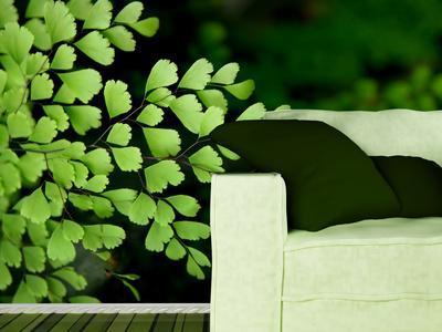 Papier peint photo plant verte