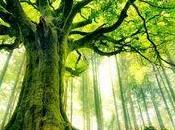 arbres plus beaux monde