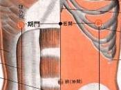 point méridien foie (14F)