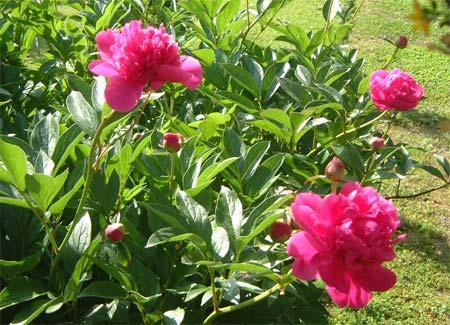 Pour ta Fête Maman, je t\'offre toutes les fleurs de ton jardin ...