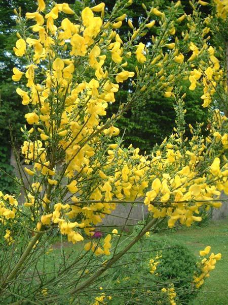 Emejing Les Fleurs De Ton Jardin Images - Fernandogalaviz.us ...