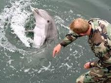 Formation dauphins tueurs l'armée