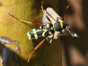 insecte attiré bois pour cheminée...