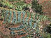 Haïti Réalisations paysannes, richesses nature