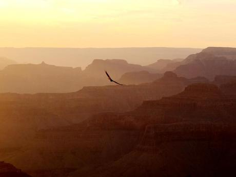 oiseau grand canyon 1024x768 Road trip USA II : Le Grand Canyon