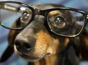 Google Glass pour chiens