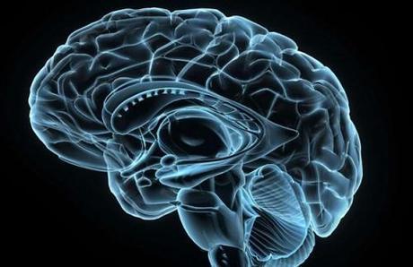 article_brain.jpg