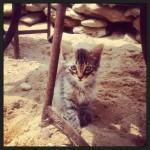 Châton chez Abdou - Essaouira - mai 2013