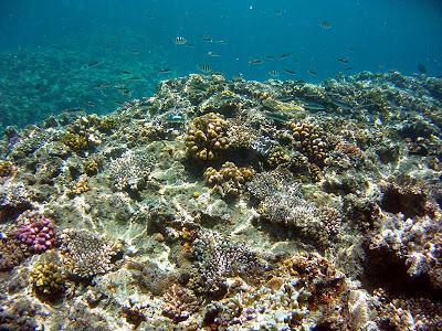 Photos sous-marines avec camera Intova