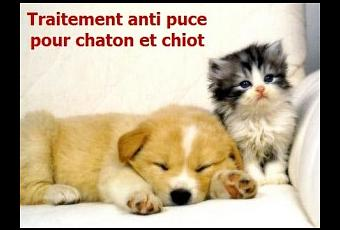 quel traitement anti puce pour chaton et chiot lire. Black Bedroom Furniture Sets. Home Design Ideas