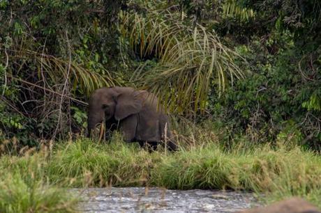 Le Gabon : l'Afrique version