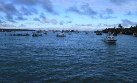 Galapagos, Puerto Ayora