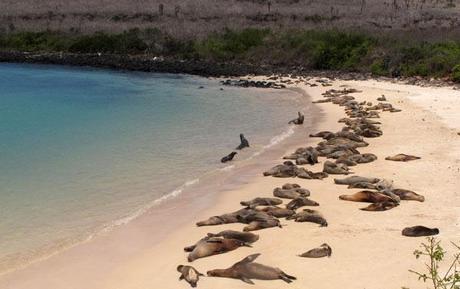 Voyage aux galapagos, île de Santa Fé