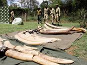 Massacres grande faune africaine, racines géoéconomiques d'un fléau plein essor