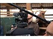 cheval embête cameraman