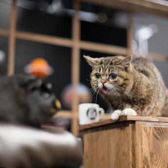Le chat de l'espace qui avait capturé le coeur de l'espèce humaine