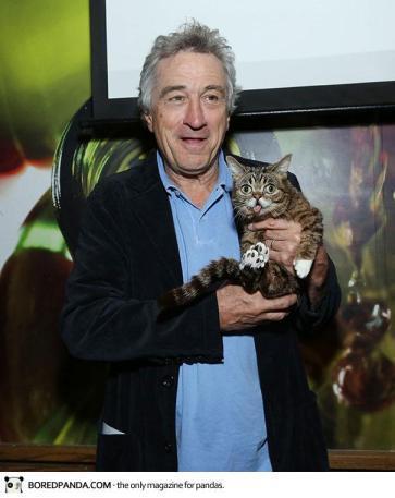 dwarf-kitten-lil-bub-cat-11