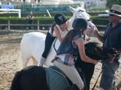Pourquoi chevaux nous font tant bien