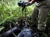 Équateur: forêt amazonienne sous chantage l'industrie pétrolifère
