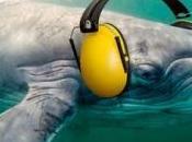 Parlement européen vote contre pollution sonore sous-marine