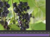 Réduction bruit vidéo avec Adobe Camera