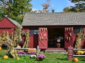 Cueillir potirons près York, tradition very américaine