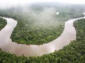 Plus nouvelles espèces découvertes Amazonie depuis 2010