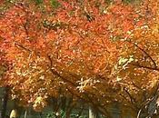 Quelques idées pour savoureux automne