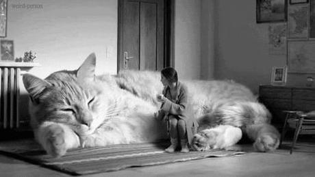 chat géant calin