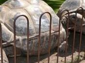français remporte prix meilleur parc animalier d'Europe