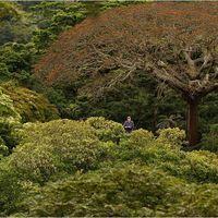 Les sommets des arbres sont riches en diversité.