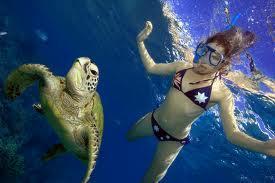 Blonde et Idiote Bassesse Inoubliable*********The Dream of The Blue Turtles de Sting