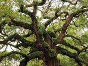Parler arbres