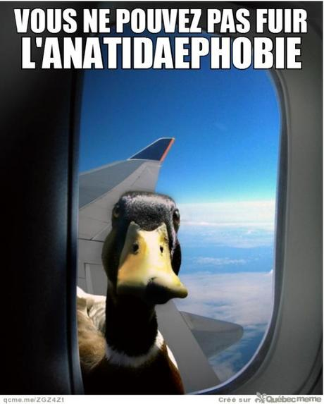 Je vous observe Lanatidaephobie-cette-peur-quun-canard-observ-L-VD9O8P