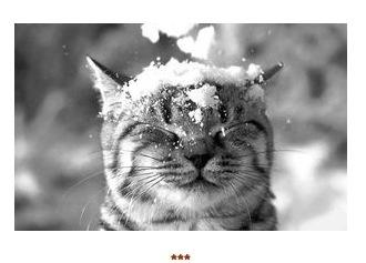 So cute Chats Neige