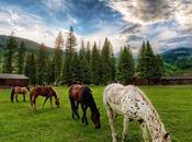 Escapade romantique dans ranch: bonne idée cadeau