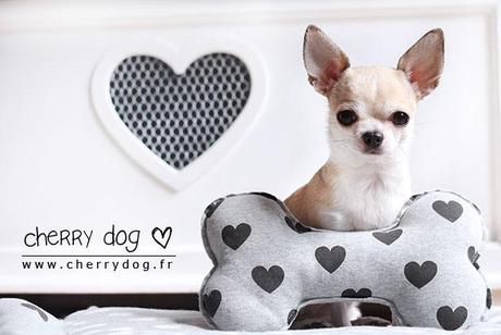 La collection Hearts PLZ Louisdog pour chiens
