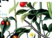 jardin poésies, jeudi décembre 17h30