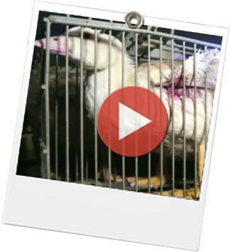 Stop_foie_gras - JulieFromParis