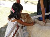 Issan, contrée moutons heureux