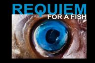 REQUIEM-FOR-A-FISH