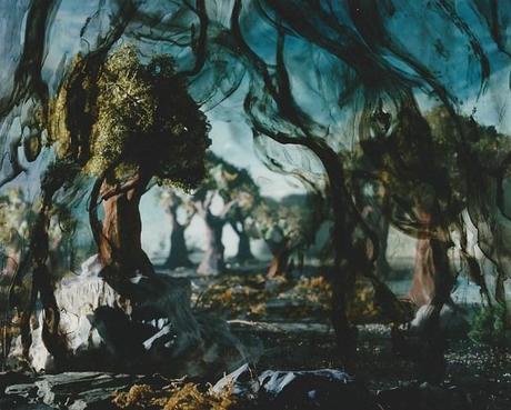 veiled_forest